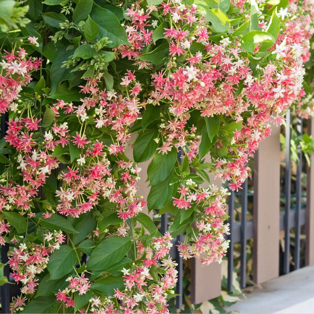 Plantas Enredaderas con Flores