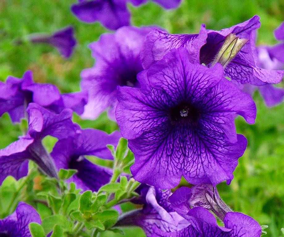 Plantas con Flores Moradas